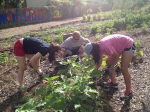 HS creating garden